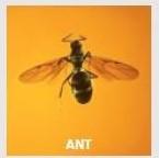 antsvstermites (3)