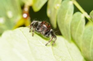 58545103 - jump spider in the green garden