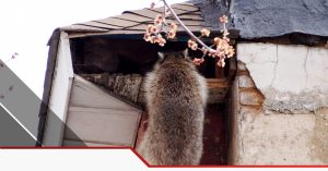 Pest Control In Euless TX