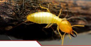 Pest Control in Grand Prairie TX