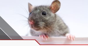 Pest Control In Irving